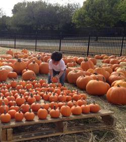 Mini pumpkins!!!